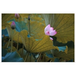 """Lotus"" Poster Print"