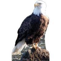 Advanced Graphics 57 Bald Eagle Life Size Cardboard Standup