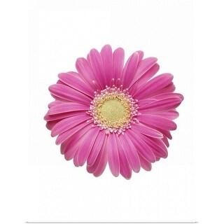 """Pink Gerbera Daisy"" Poster Print"