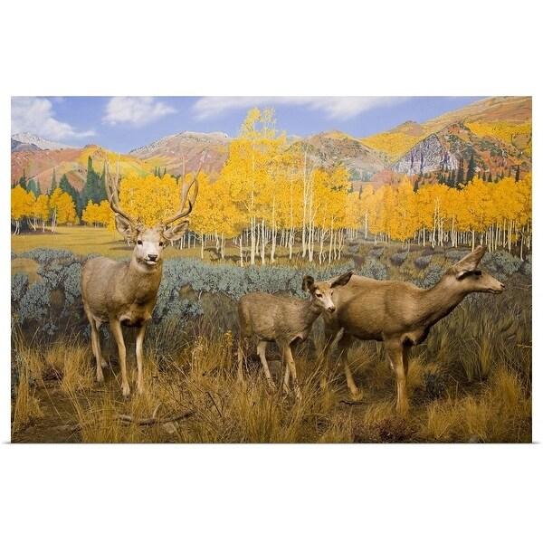 """""""Mule Deer at the Utah Natural History Museum, University of Utah, Salt Lake City, Utah"""" Poster Print"""