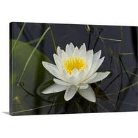 Premium Thick-Wrap Canvas entitled White water lilly