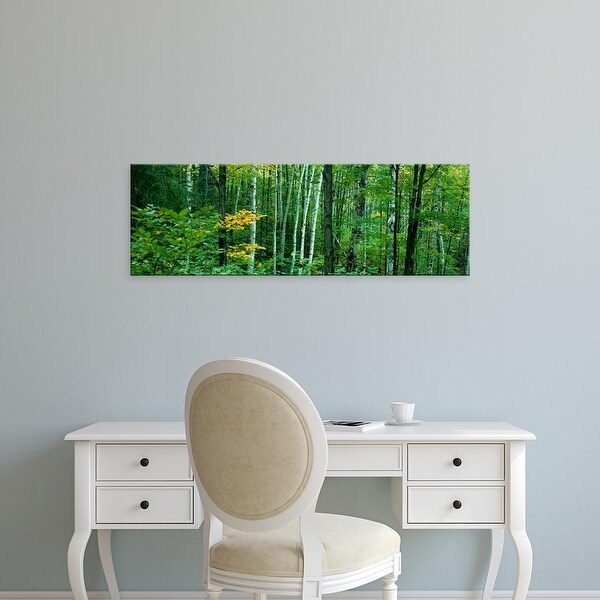 Easy Art Prints Panoramic Images's 'Birch trees in a forest, Ontario, Canada' Premium Canvas Art