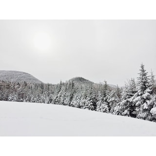 Snowy Forest And Trees Photograph Art Print