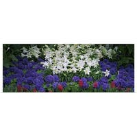 Poster Print entitled Close-up of lilies in a garden, Botanical Gardens of Buffalo & Erie County, Buffalo, New York