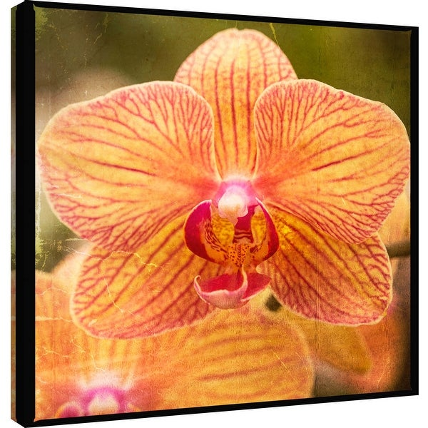 """PTM Images 9-101260 PTM Canvas Collection 12"""" x 12"""" - """"Gold Orchid"""" Giclee Orchids Art Print on Canvas"""