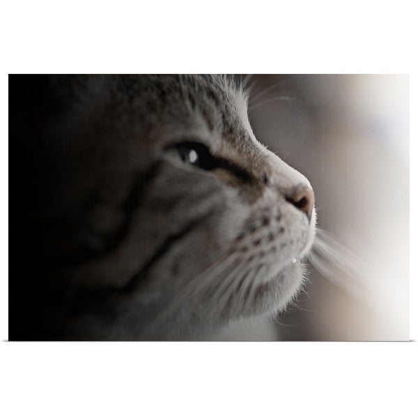 """Close up of cat."" Poster Print"
