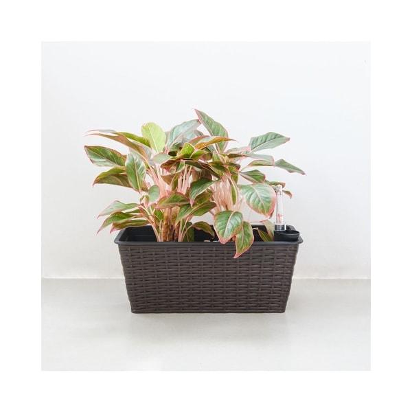 "23"" Coffee Brown Thin Rectangular Self-Watering Planter - N/A"