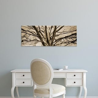 Easy Art Prints Panoramic Images's 'Low angle view of a bare tree' Premium Canvas Art