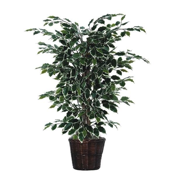 4' Variegated Ficus Bush - green / white