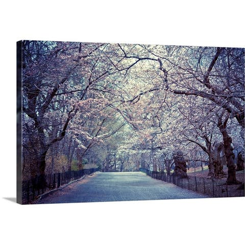 """""""Cherry blossoms trees in Central Park's bridle path in New York City."""" Canvas Wall Art"""