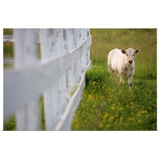 """""""Cows in the field"""" Poster Print"""