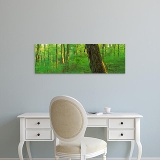 Easy Art Prints Panoramic Images's 'Trees in a forest, Hoosier National Forest, Indiana, USA' Premium Canvas Art