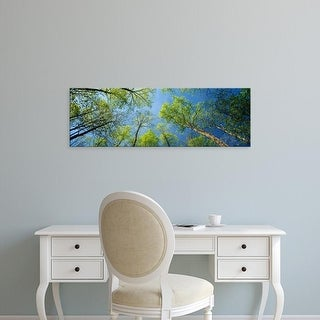 Easy Art Prints Panoramic Image 'Yellow poplar trees, Great Smoky Mountains National Park, Tennessee' Canvas Art