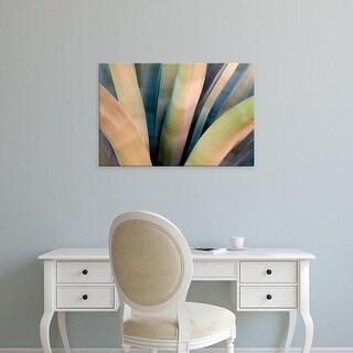 Easy Art Prints Dana Echols's 'Agave, Tucson' Premium Canvas Art