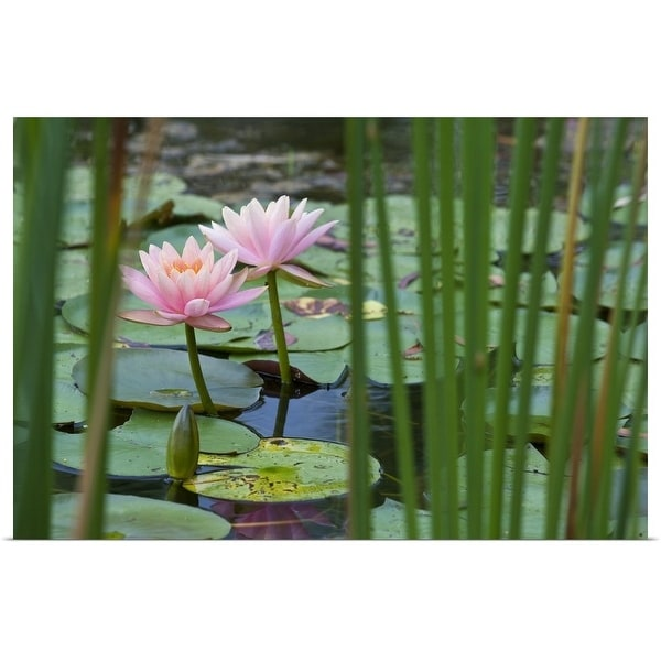 Shop Lotus Flowers In Pond Multi Color Free Shipping On Orders
