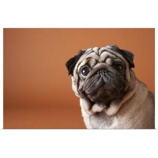 """""""Dog, close-up"""" Poster Print"""