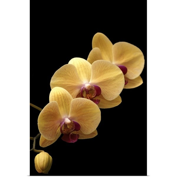 """""""Yellow orchid"""" Poster Print"""
