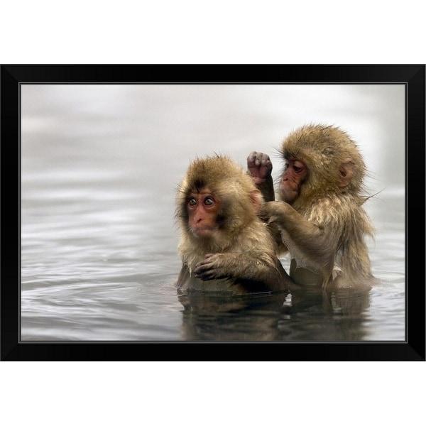 """Baby snow monkeys in Jigokudani monkey park, Nagano prefecture, Japan."" Black Framed Print"