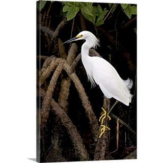 """Snowy Egret"" Canvas Wall Art"