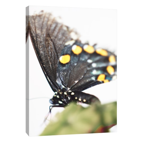 "PTM Images 9-108386 PTM Canvas Collection 10"" x 8"" - ""Butterfly Az 8"" Giclee Butterflies Art Print on Canvas"