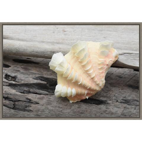 Ruffled Clam shell on beach by Savanah Plank Framed Canvas Art