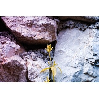 Rock And Flower Photograph Wall Art Canvas