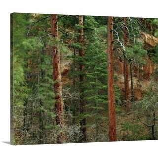 """Ponderosa pine trees in Oak Creek Canyon, Coconino National Forest, Arizona"" Canvas Wall Art"