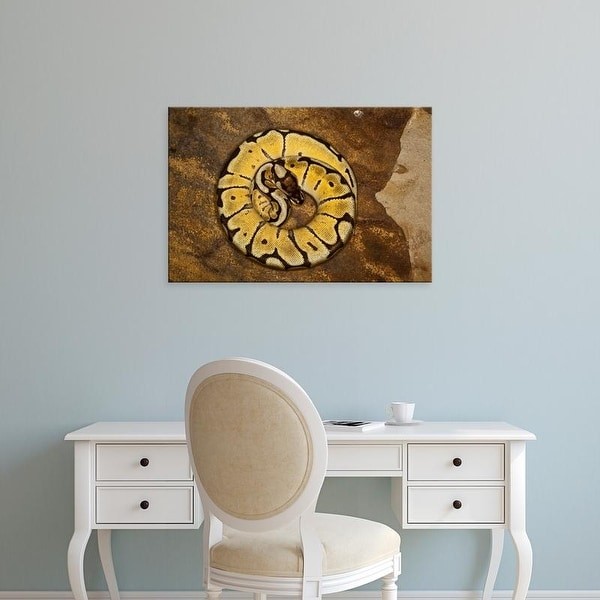 Easy Art Prints Adam Jones's 'Ball Python Morph' Premium Canvas Art