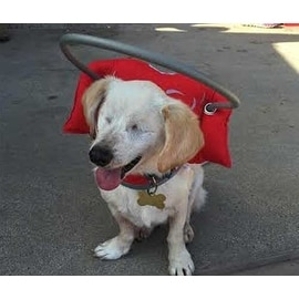 Shop Muffin S Halo For Blind Dogs Angel Wing Red Free
