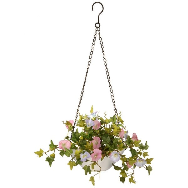 "9"" Morning Glory Plant Hanging Basket - N/A"
