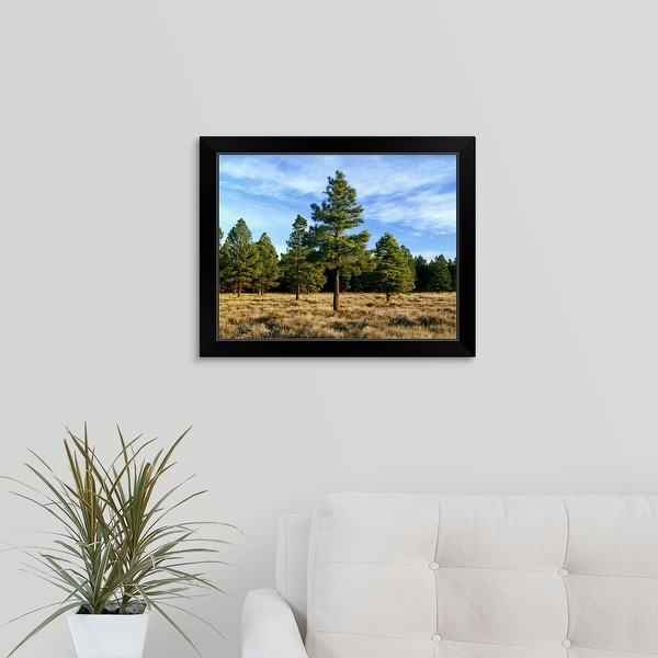 """""""Frosted underbrush in ponderosa pine tree forest, Kaibab National Forest, Arizona"""" Black Framed Print"""