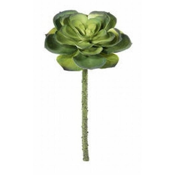 CE0342-GR 11.5 in. Echeveria Pick Green- Case of 24