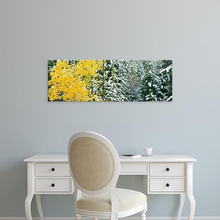 Easy Art Prints Panoramic Image 'Aspen, Evergreen trees while snowing, Grand Teton National Park, Wyoming' Canvas Art
