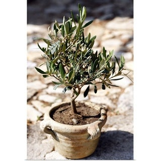 """""""Miniature olive tree growing in a rustic terracotta pot in a garden in Proven"""" Poster Print"""