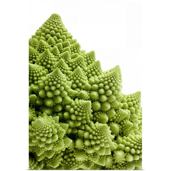 """Romanesco Broccoli against white background"" Poster Print"