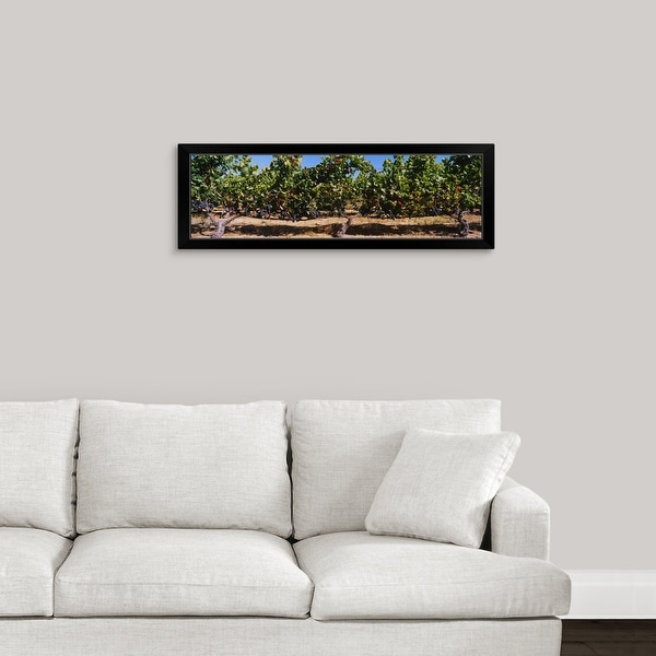 """Grape vines in a vineyard, Napa Valley, Napa County, California"" Black Framed Print"