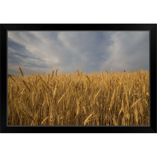 """Early morning Landscape of Wheat in Palouse"" Black Framed Print"