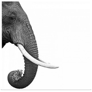 """Elephant"" Poster Print"