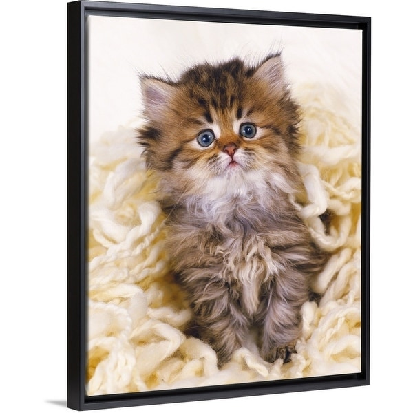 Shop Persian Cat Sitting on White-colored Wool - Multi-color - On