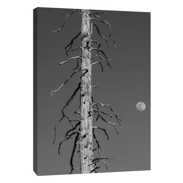 """PTM Images 9-105188 PTM Canvas Collection 10"""" x 8"""" - """"Silver Snag"""" Giclee Art Print on Canvas"""