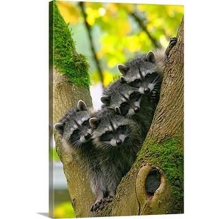 """Baby Raccoons"" Canvas Wall Art"