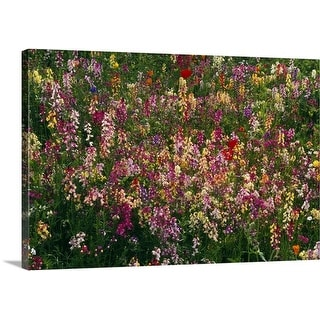 Premium Thick-Wrap Canvas entitled Wildflowers in bloom, close-up.