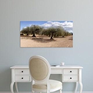 Easy Art Prints Panoramic Images's 'Olive grove, Vinaros, Province of Castellon, Spain' Premium Canvas Art