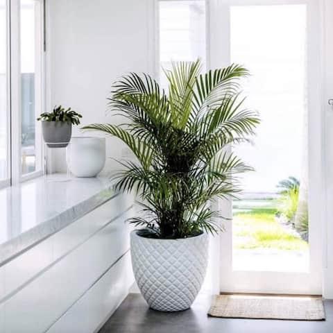 DreamPatio Irvine 1-Piece Fiberstone Pineapple Planter