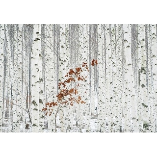 """Brewster WG5104-4P-1  White Birch Forest 100"""" x 144-3/4"""" Botanical Non-Pasted Repositionable Vinyl Coated Paper Mural - 4 Panels"""