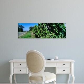 Easy Art Prints Panoramic Images's 'Vineyard in Bacharach along River Rhine, Rhineland