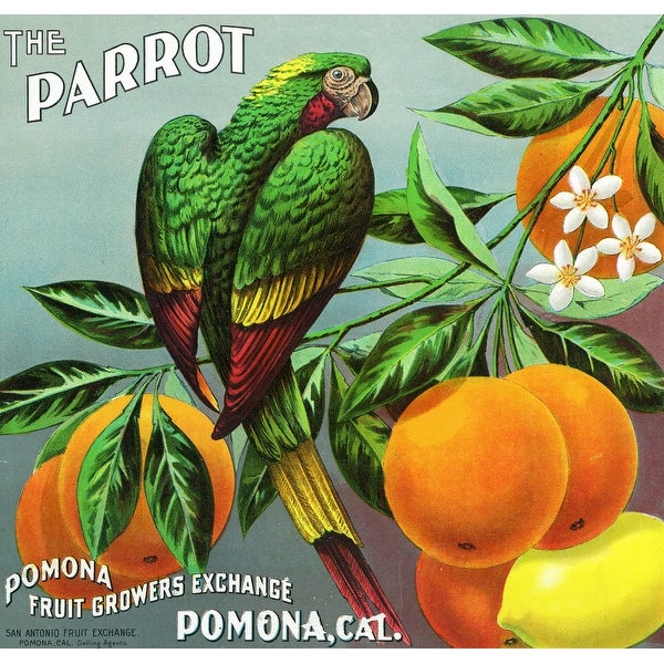 Pomona, CA - The Parrot Citrus - Vintage Label (Acrylic Wall Clock)