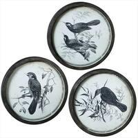"Set of 3 Black Iron Framed Vintage Inspired Bird Wall Art 21"""