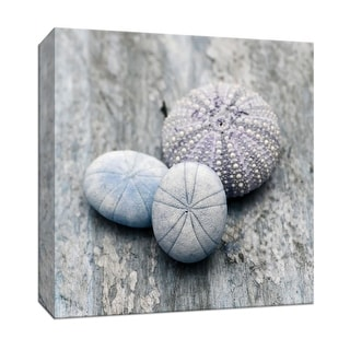 """PTM Images 9-147639  PTM Canvas Collection 12"""" x 12"""" - """"Driftwood Shell III"""" Giclee Shells Art Print on Canvas"""