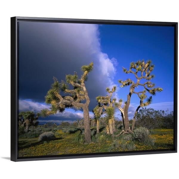 Shop California Mojave Desert Joshua Tree Black Float Frame